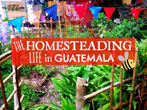The Homesteading Life in Guatemala - The Urban Ecolife