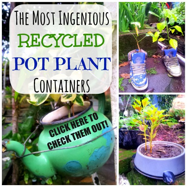 The Most Ingenious Recycled Pot Plant Containers - The Urban Ecolife
