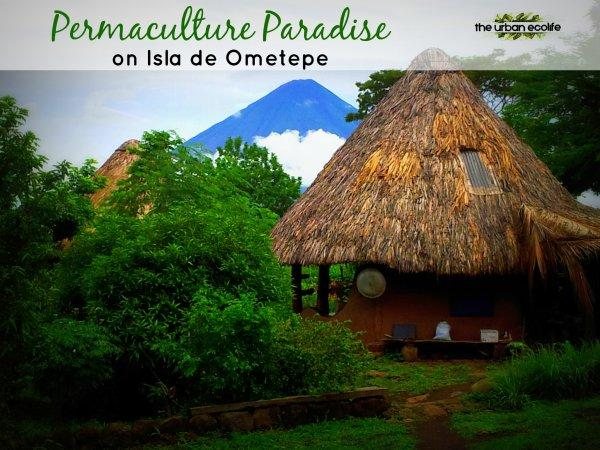 Permaculture Paradise on Isla de Ometepe - The Urban Ecolife