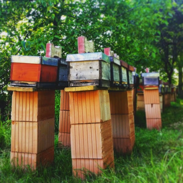 Beekeeping in Romania and The Unromantic Side of 'Romantic' Dreams