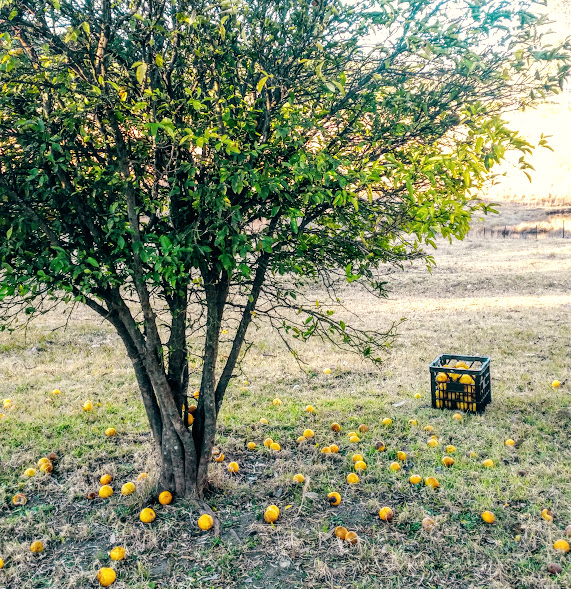 What to do when life gives you lemons? The Urban Ecolife