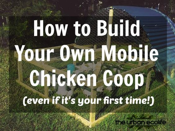 how-to-build-your-own-mobile-chicken-coop-even-if-its-your-first-time-the-urban-ecolife